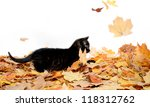 Stock photo cute black baby kitten playing in pile of fall leaves on white background 118312762
