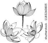 lotus flower. floral botanical ... | Shutterstock . vector #1183260805
