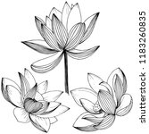 lotus flower. floral botanical ... | Shutterstock . vector #1183260835