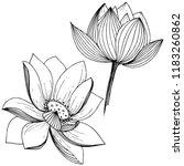 lotus flower. floral botanical ... | Shutterstock . vector #1183260862