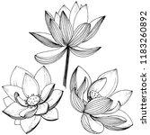 lotus flower. floral botanical ... | Shutterstock . vector #1183260892