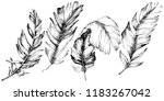 bird feather from wing... | Shutterstock . vector #1183267042
