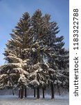 three large firs covered with...   Shutterstock . vector #1183322788