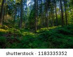 in the green black forest  ... | Shutterstock . vector #1183335352