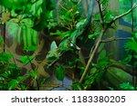 chameleon lizard blending in to ... | Shutterstock . vector #1183380205