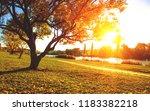 autumn trees on sun in park | Shutterstock . vector #1183382218