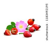 beautiful fragrant rosehip.... | Shutterstock .eps vector #1183492195