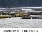 Oyster Farming And Oyster Traps ...
