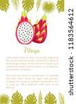 pitaya or pitahaya exotic juicy ... | Shutterstock .eps vector #1183564612
