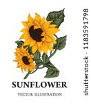Sunflower. Vector Illustration...
