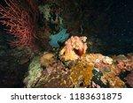 deep underwater world  | Shutterstock . vector #1183631875