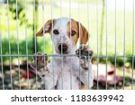Stock photo homeless dog puppy behind dog shelter bars 1183639942