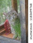 cat in the balcony   Shutterstock . vector #1183699768