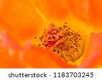 flower background for greetings ...   Shutterstock . vector #1183703245