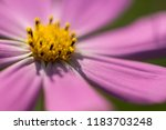 flower background for greetings ...   Shutterstock . vector #1183703248