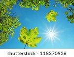 crown of a maple tree and... | Shutterstock . vector #118370926