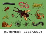 big set of insects. vintage... | Shutterstock .eps vector #1183720105