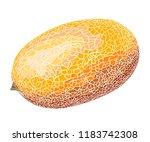 hand drawn sketch of melon in... | Shutterstock .eps vector #1183742308