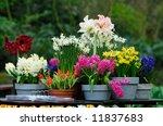 Beautiful Garden Flowers In...