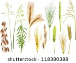 illustration with cereals...   Shutterstock .eps vector #118380388