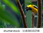 bright yellow  white  and black ... | Shutterstock . vector #1183810258