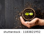 the seedlings are growing in... | Shutterstock . vector #1183821952