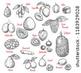 exotic tropical fruits sketch.... | Shutterstock .eps vector #1183929028
