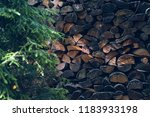 composed wood in the forest | Shutterstock . vector #1183933198