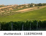 panoramic view of olive groves  ... | Shutterstock . vector #1183983448