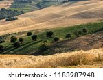 view of olive groves and... | Shutterstock . vector #1183987948