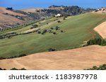panoramic view of olive groves... | Shutterstock . vector #1183987978
