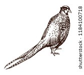 antique engraving pheasant... | Shutterstock .eps vector #1184100718