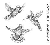 hand drawn humming birds... | Shutterstock .eps vector #1184166295