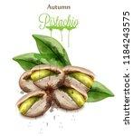 pistachio watercolor vector... | Shutterstock .eps vector #1184243575