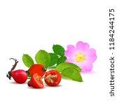 beautiful fragrant rosehip.... | Shutterstock .eps vector #1184244175