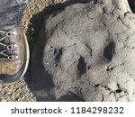 A Backpacker Finds A Dinosaur...