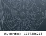 spider web on a dewy morning on ... | Shutterstock . vector #1184306215