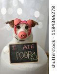 Stock photo dog dressed as a pig after eat poop 1184366278