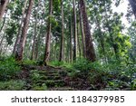 unmaintained or abandoned...   Shutterstock . vector #1184379985