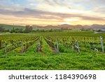 vineyards landscape at sunset... | Shutterstock . vector #1184390698