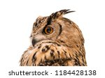 Stock photo head of adult eurasian eagle owl isolated on white background the horned owl side view 1184428138