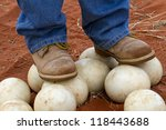 Man Stands On Ostrich Eggs To...