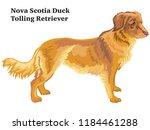 portrait of standing in profile ... | Shutterstock .eps vector #1184461288