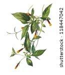 color illustration of flowers... | Shutterstock . vector #118447042