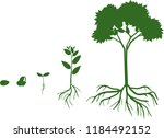 plant growth stage from seed to ... | Shutterstock .eps vector #1184492152