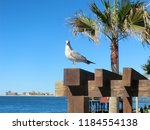 mexico  sonora  rocky point ... | Shutterstock . vector #1184554138