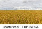 dull and rainy weather on an...   Shutterstock . vector #1184659468