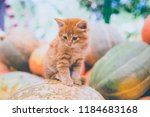 cute red kitten sitting on a... | Shutterstock . vector #1184683168