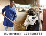 portrait of positive african... | Shutterstock . vector #1184686555