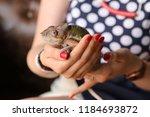 woman holding iguana tropical... | Shutterstock . vector #1184693872